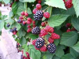 110724blackberry2