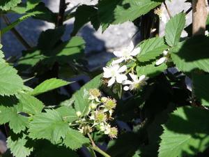 160522blackberry
