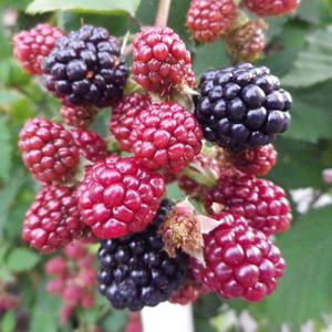 160717blackberry